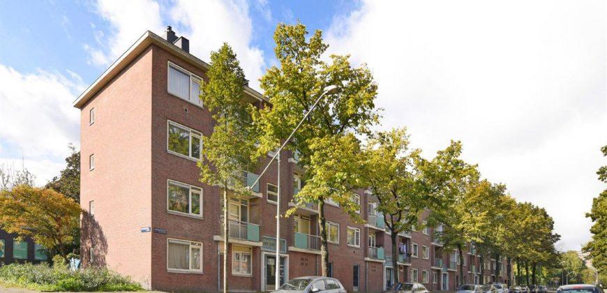 AMSTERDAM WERENGOUW 439